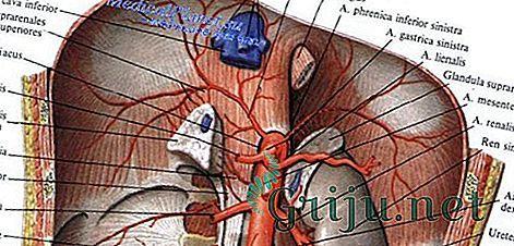 Грыжа пищеводного отверстия диафрагмы (ГПОД): симптомы, лечение, правильное питание при грыже пищевода